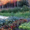 Fall Garden With Cold Frame